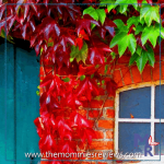 Wordless Wednesday- Theme: Signs Of Fall