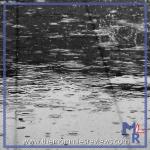 Wordless Wednesday April 6- Theme: Raining