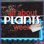 Plants Unit Study