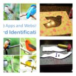 Homeschooling In Texas Birds Lesson Plans/Unit Study
